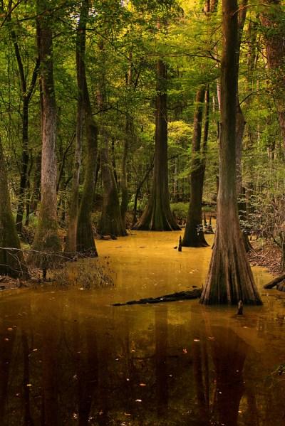 The Ultimate Natural Wonders Road Trip In South Carolina