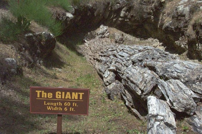 3. Explore this Petrified Forest in Calistoga.