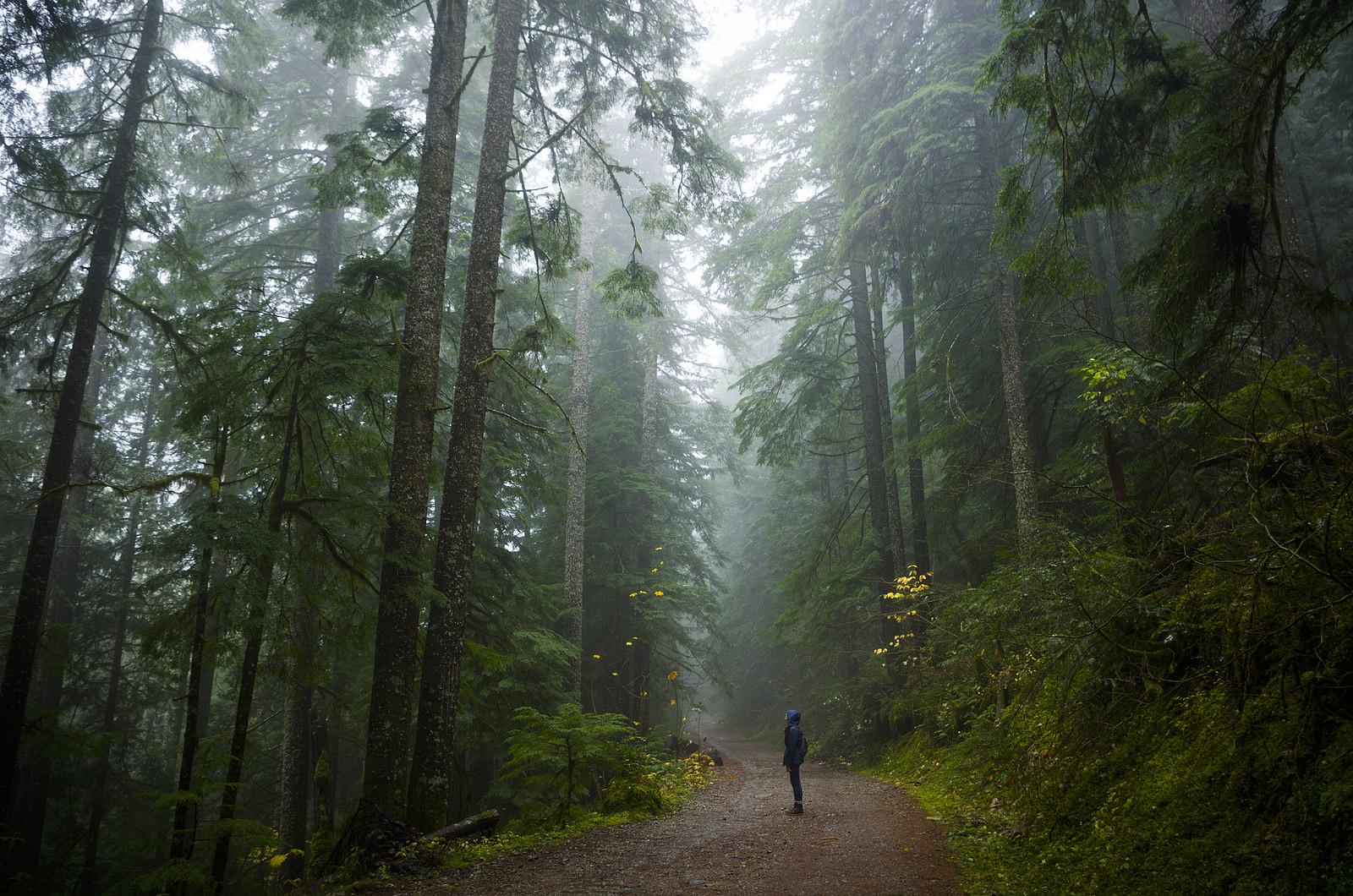Michigan Fall Wallpaper You Ll Never Forget This Enchanting Hike Along Oregon S