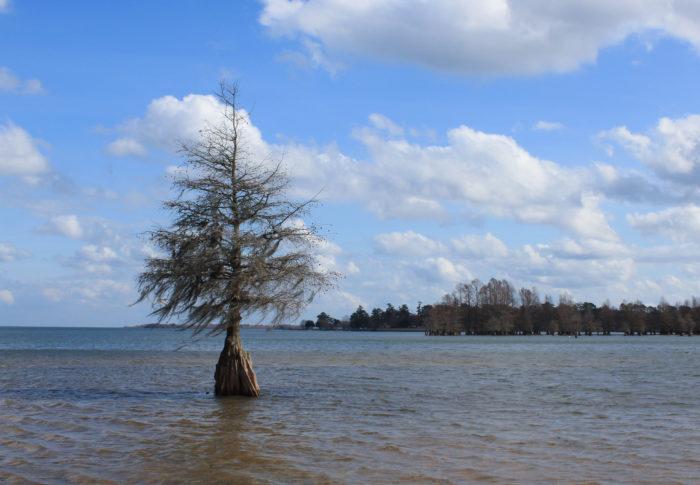 South Carolina Has a Huge Inland Sea