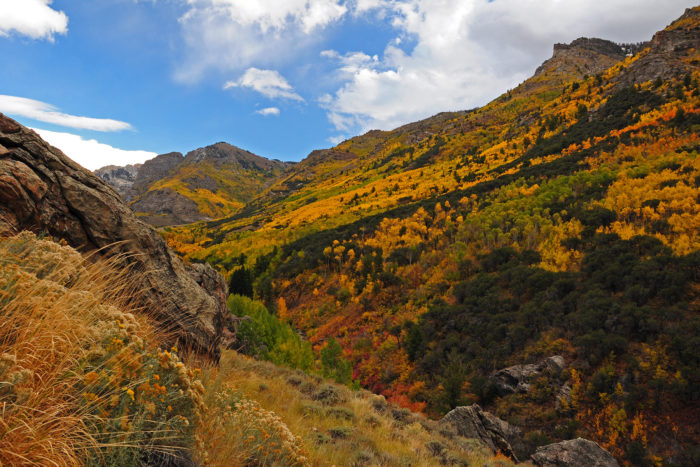 Free Fall Foliage Wallpaper Don T Miss These 11 Places To See Gorgeous Fall Foliage In