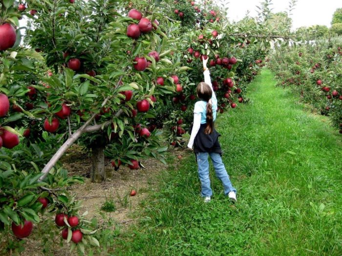 Hitagi Falling Wallpaper The 10 Best Apple Orchards In Iowa To Visit For Fall 2016