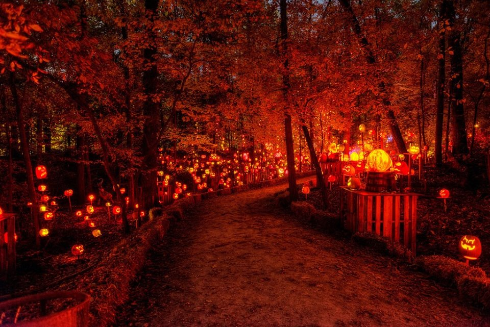 Portland Oregon Fall Had Wallpaper Visit This Kentucky Park For A Spectacular Light Show This