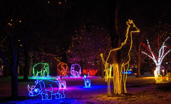 Zoo Lights Denver Zoo