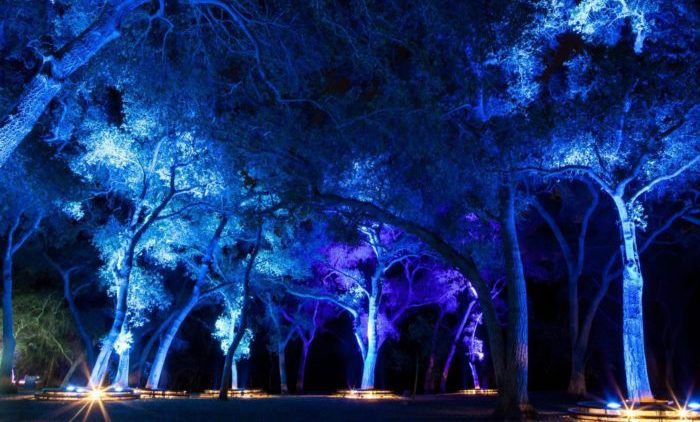Visit This Enchanted Forest In Southern California This Winter