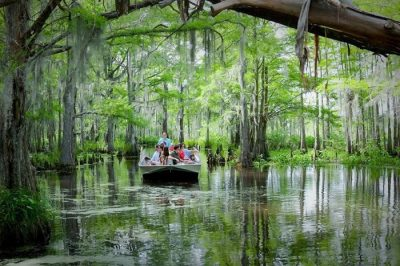 11 Swamp Boat Tours In Louisiana That Will Make You Fall ...