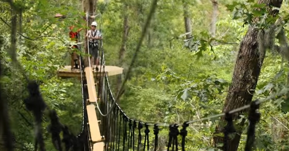 Swing From Tree To Tree In This Epic Canopy Course At