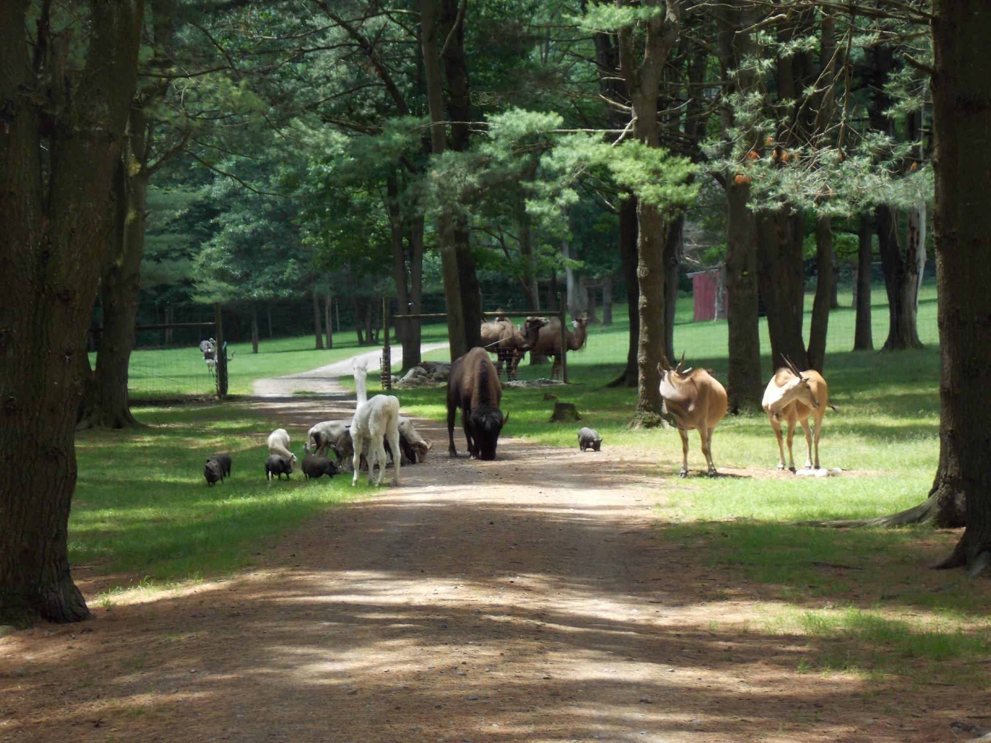 Everyone Should Visit New Yorks Adirondack Animal Land At