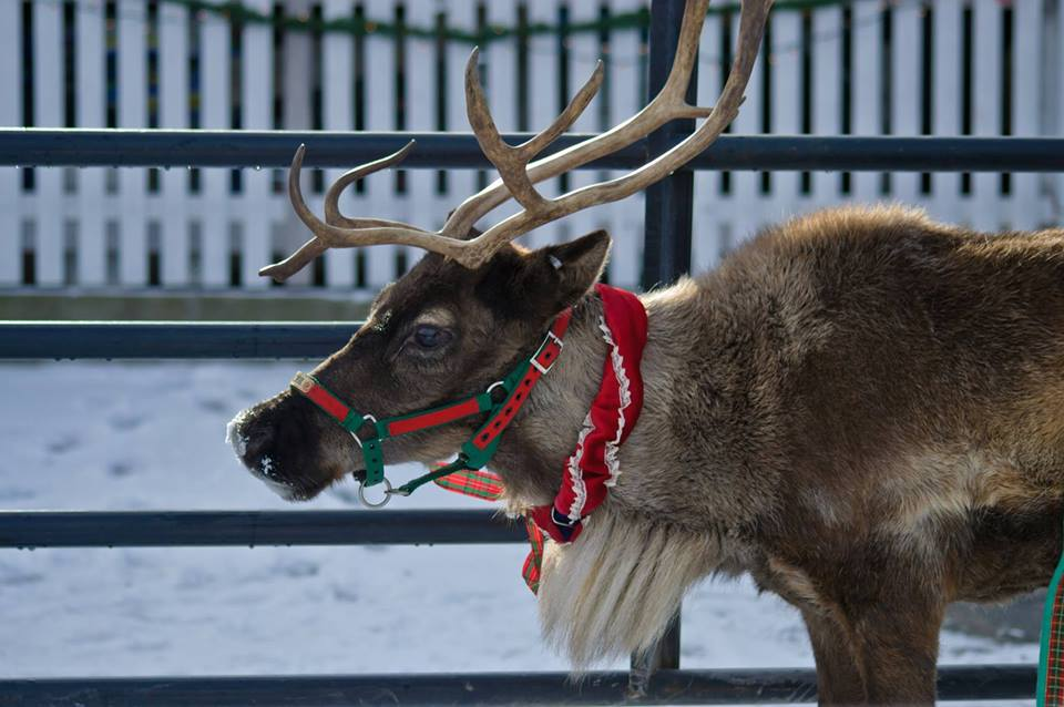This Reindeer Farm In Vermont Will Positively Enchant You