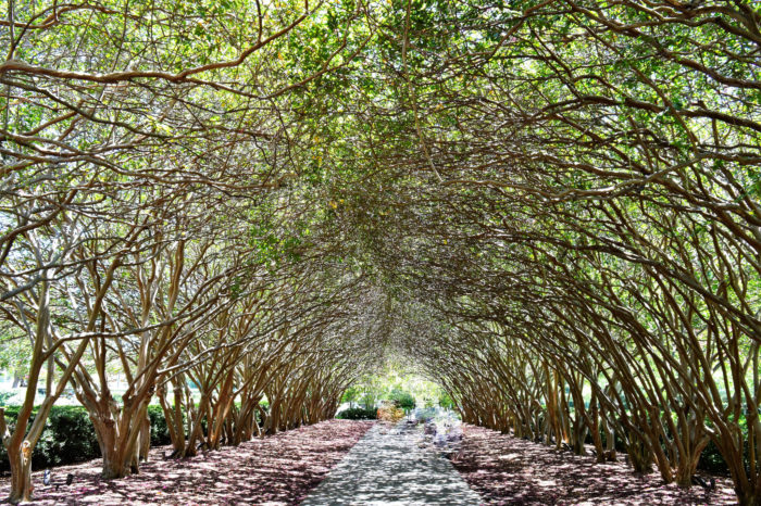 Kentucky Fall Wallpaper 6 Tree Tunnels In Texas That Make You Feel Like You Re In