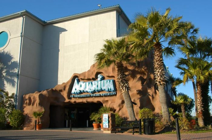 The Kemah Aquarium Is The Most Unique OceanThemed