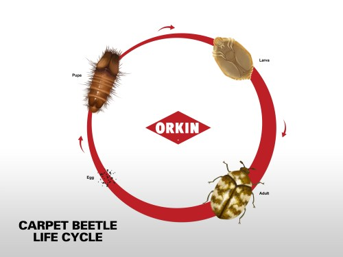 small resolution of life cycle chart
