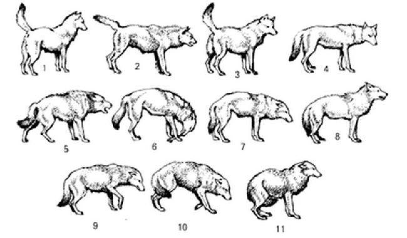 Šta vam pas želi poručiti svojim repom?