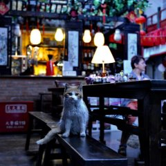 Beijing Red Lantern House In Beijing China From 78 Photos