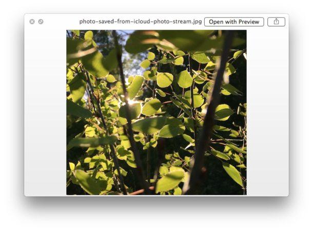 Предварительный просмотр файла в корзине с помощью Quick Look для Mac