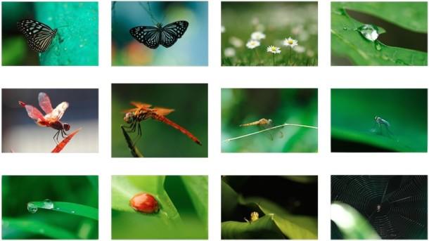 12 невероятно потрясающих обоев с макросъемками природы