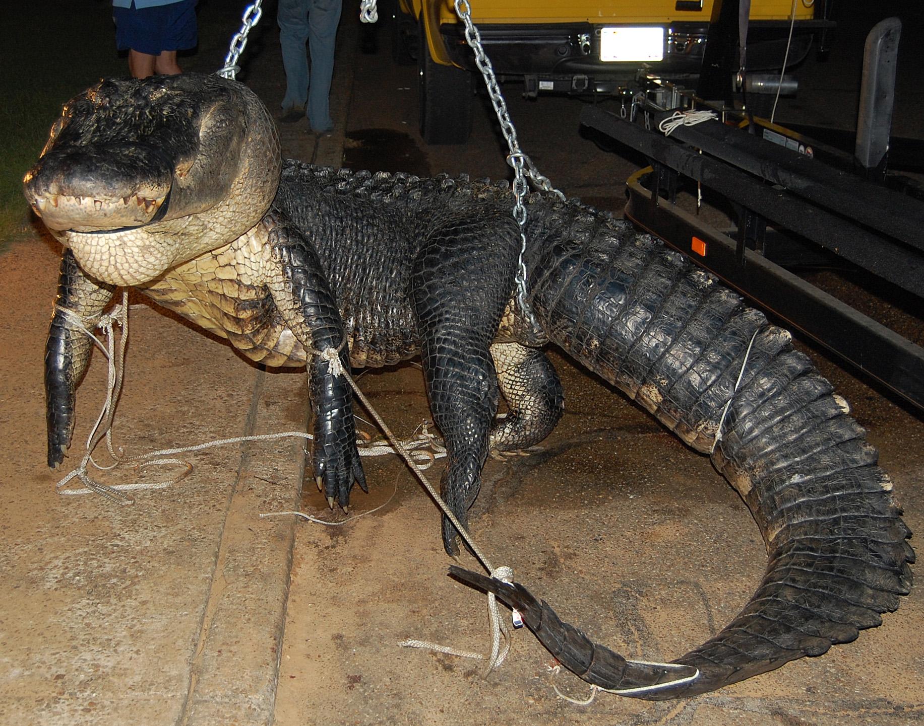 Alabama Hunters Recognized for Seasons Largest Gators