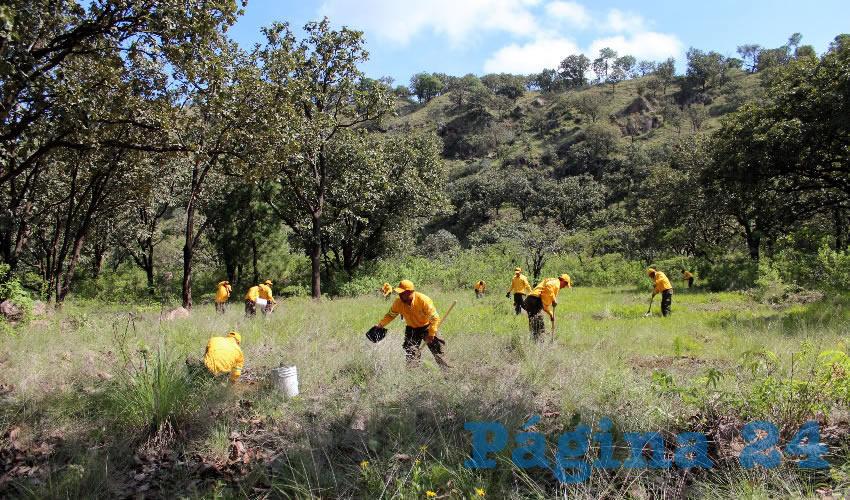 La intención del gobierno federal es que para 2018 dé comienzo el proyecto Cerritos Colorados, que fue analizado desde la década de los 80. Sin embargo, la CFE no ha entregado detalles del proyecto ejecutivo o estudios de impacto ambiental/Foto: Archivo Página 24