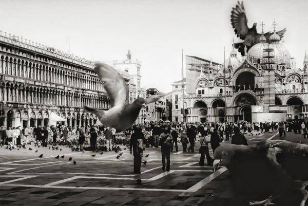 Pigeons_Venice_David Blackwell.jpg