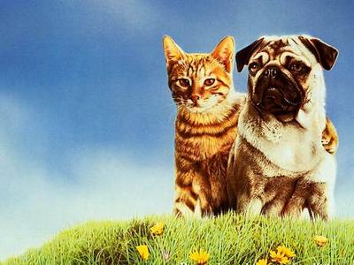 Two Cute Friends Wallpaper The 20 Best Cats In Pop Culture Geek Lists Paste