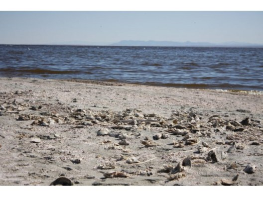 Salton Sea May Get Extra Smelly Today, Officials Warn