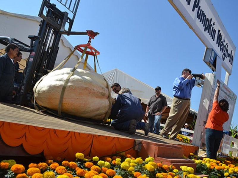 Giant Pumpkins Take Over Uesugi Farms  Gilroy CA Patch