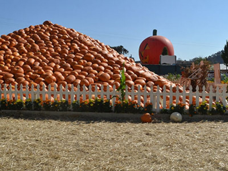 Giant Pumpkins Take Over Uesugi Farms  Gilroy CA Patch