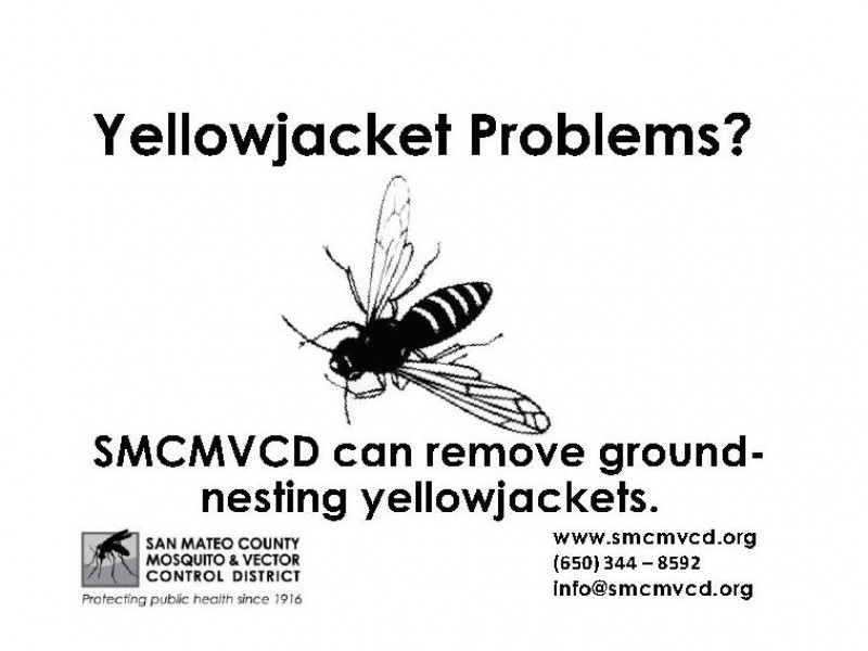 San Mateo County CA: Do You Have Ground Nesting Yellow