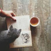 Cat and tea on fall season