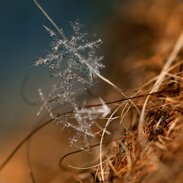 Ethereal Macro Photos of Snowflakes in the Moments Before They Disappear macrosnow 2