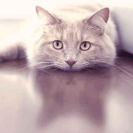 7 Common Reasons For Cat Puking | PetCareRx