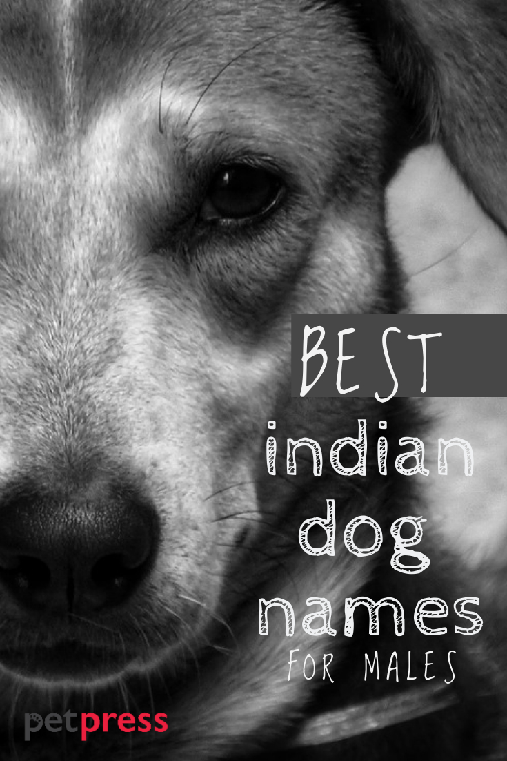 Indian Dog Names Male : indian, names, Indian, Names, India, PetPress