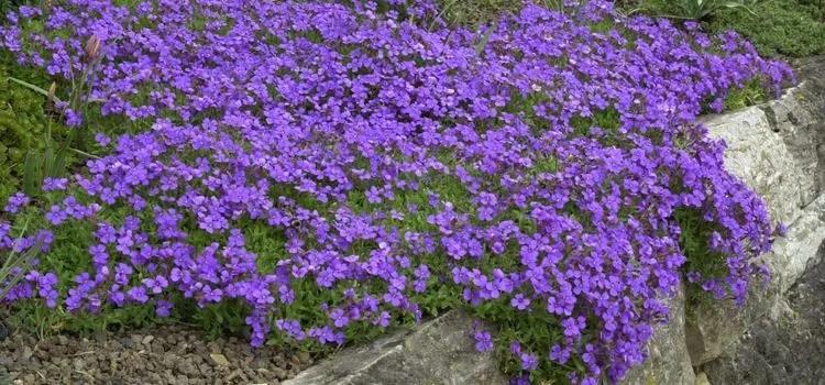Die beliebtesten GartenThemen  Pflanzmichde