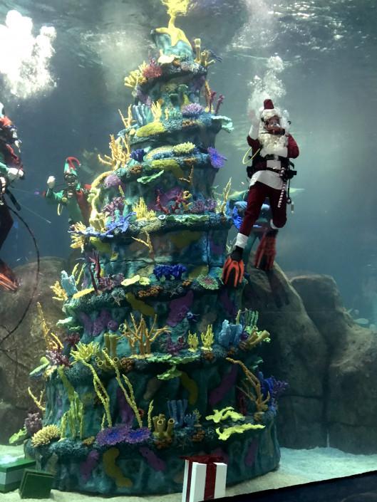 A Parents Guide To Adventure Aquariums Christmas