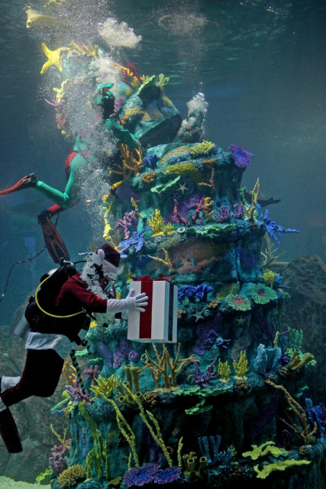 A Parents Guide To Adventure Aquariums Christmas