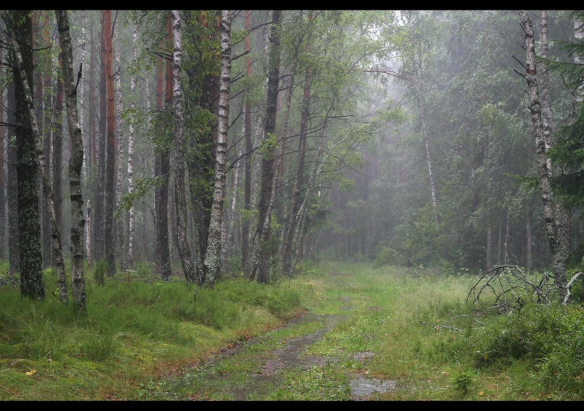 Дождь в лесу Дождь