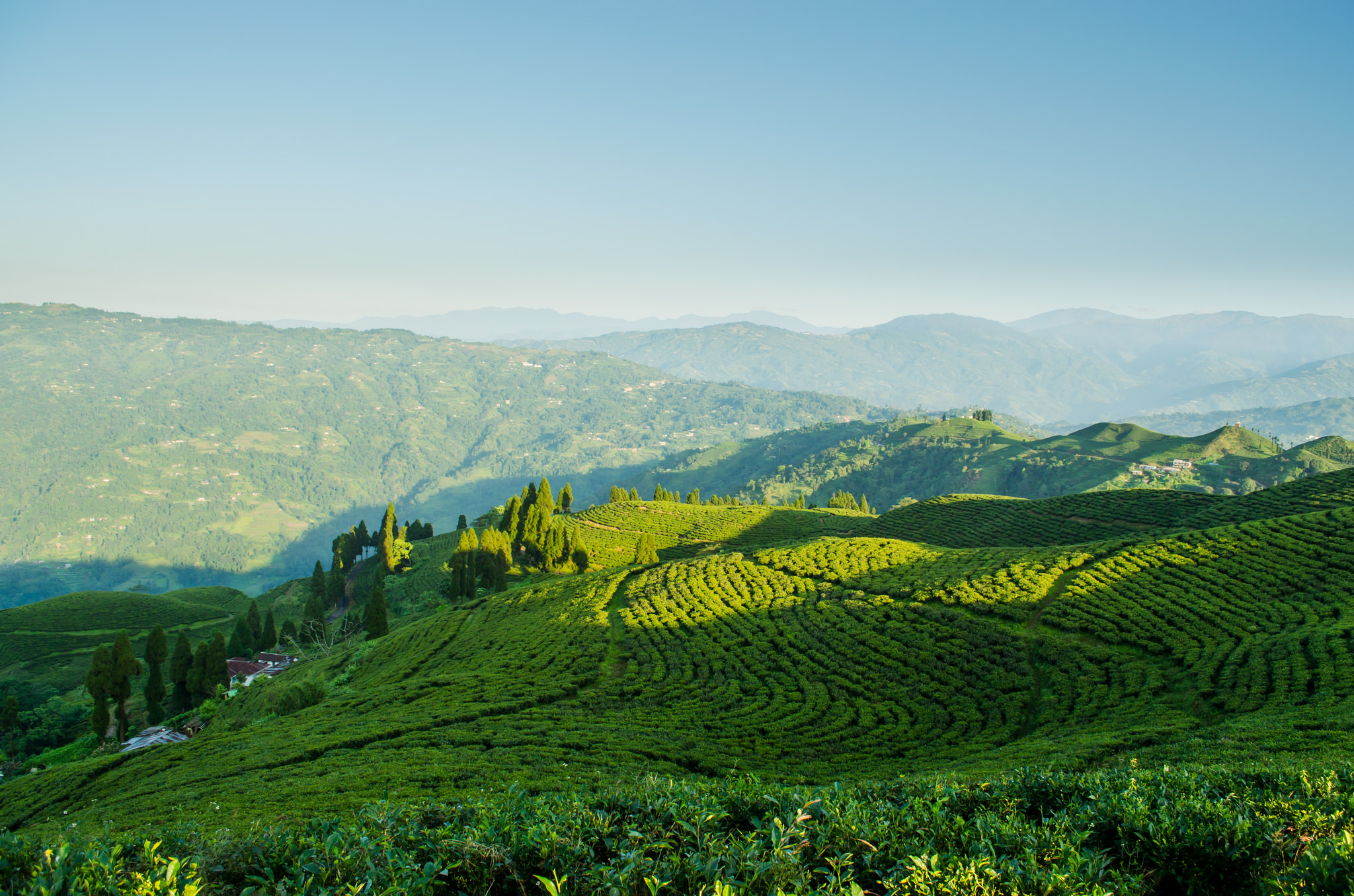 Kanyam Tea Gardens  Best Photo Spots