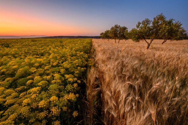 Ajloun Field Sunset