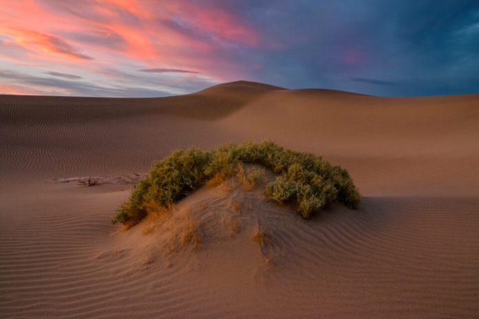 An image of a sand dune in Death Valley National Park that is intended for viewing EXIF data.
