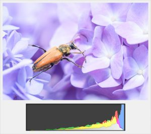 Overexposed color histogram
