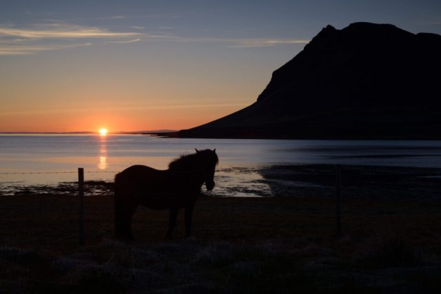 This photo of a horse in Iceland is extremely dark and needs significant shadow recovery.