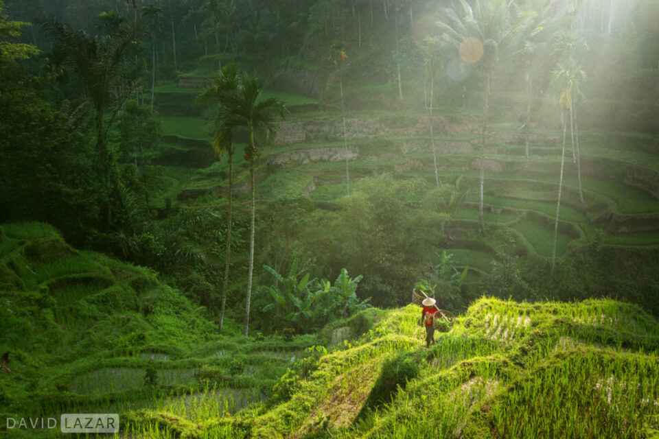 10. David Lazar - Bali 2015