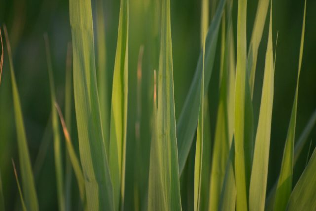 Detail Shot of Grass