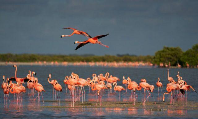 3. American Flamingo, Mexico