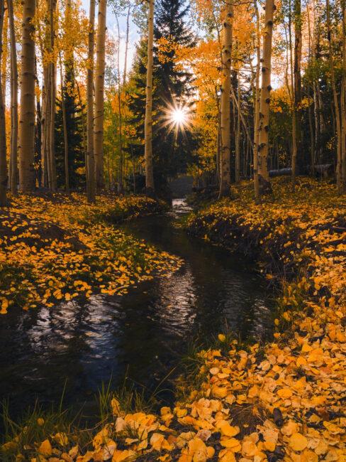 Sunstar on Nikon Z 24-70mm f4 S Lens