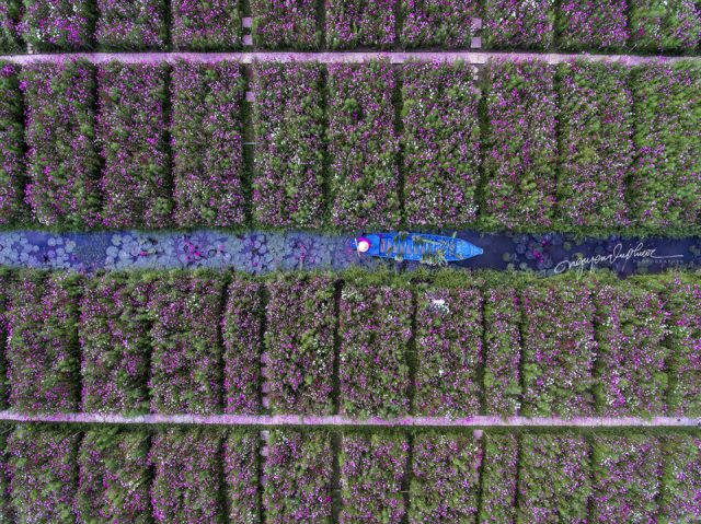 14. Nguyen-vu-Phuoc - Flower farming