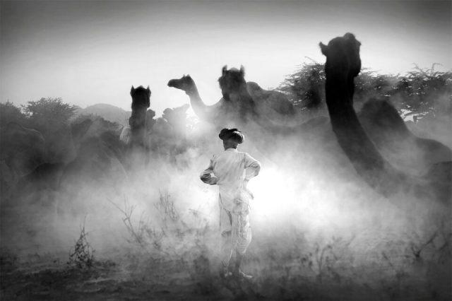 7.-Swarup-Chatterjee_Holi-India_Camel-Fair