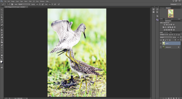 Opacity in Photoshop