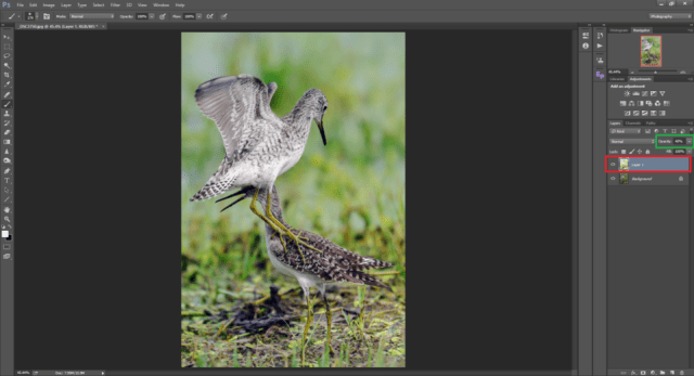 Opacity Tool in Photoshop