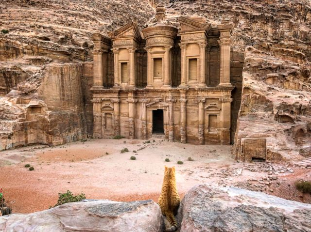 An image of a cat sitting in front of the Monastery of Petra, Jordan - aspect ratio in photography